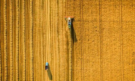 South Australian grain harvest decreases