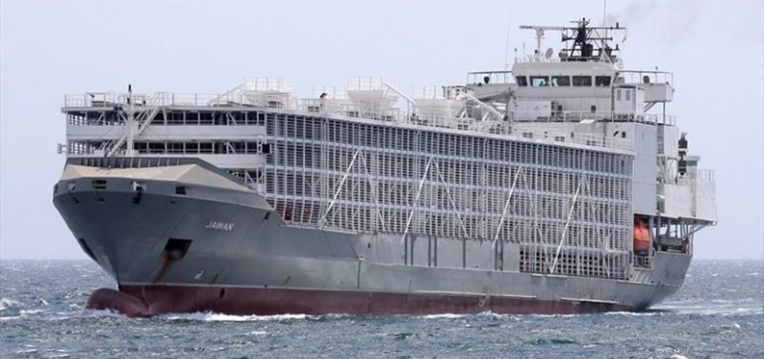 AMSA bans troubled livestock carrier