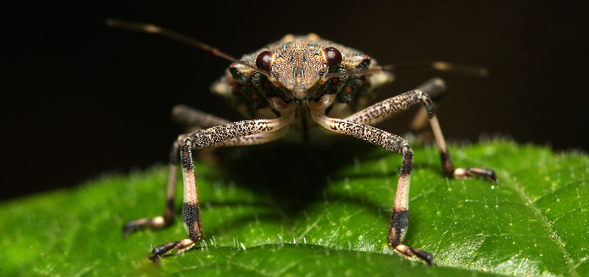 Ro-ro operator hits out at stink bug treatment rules