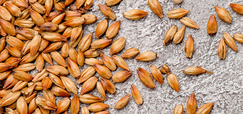 GrainCorp excited by prospects for malt