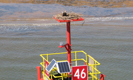 Osprey families get new homes in Port Hedland