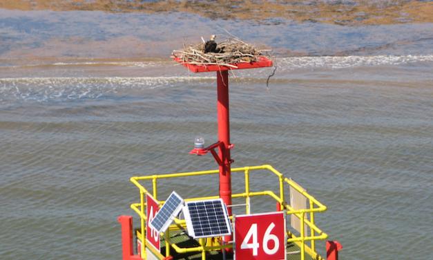 Osprey families get new homes in Port Hedland