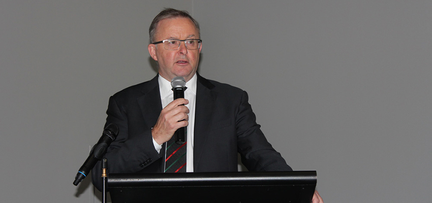 Albo confirmed as Labor leader