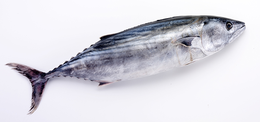 Nothing fishy about K + N perishables expansion