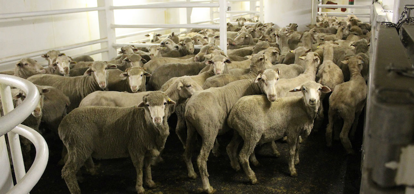 Moves to appoint an independent inspector of live exports