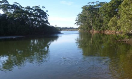 Gladstone Ports supports mangrove boardwalk construction