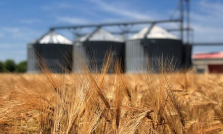 APEC workshop identifies future work on grain NTMs