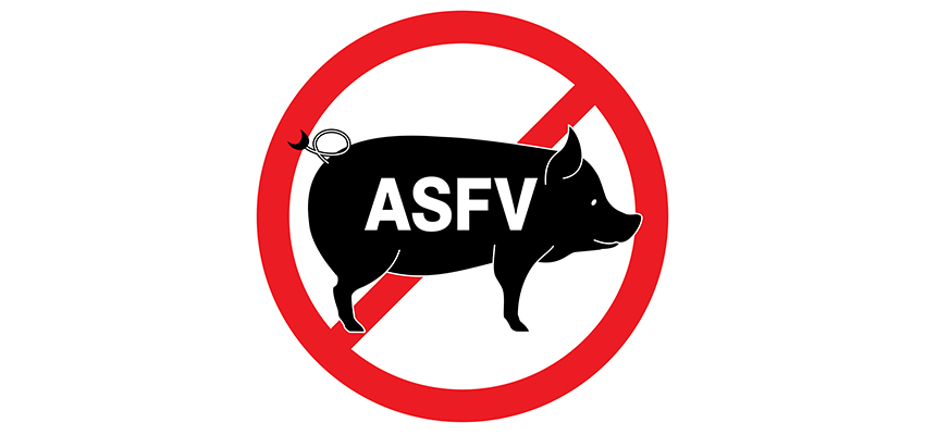 Government moves to battle swine fever
