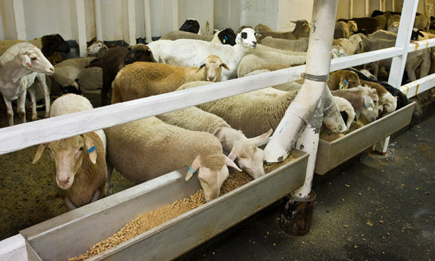 Live export exemption rejected for Al Kuwait vessel