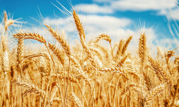 ACCC finds two Viterra grain ports not exempt from Bulk Wheat Code