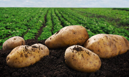 Aussie potato exporters get greater access to Thailand (with video)