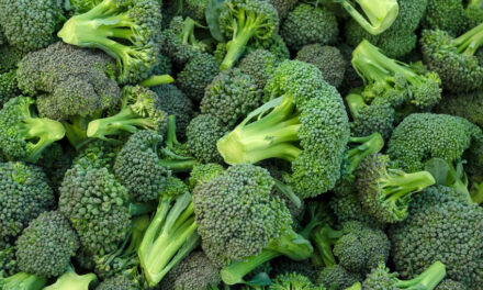 Queensland broccoli set to soar in Singapore