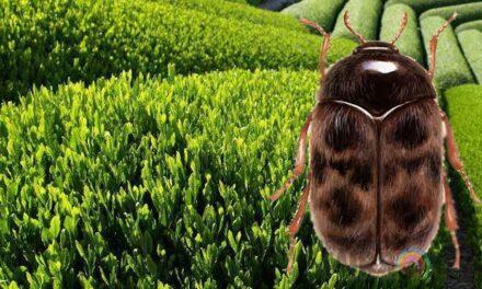 Urgent actions to address invasive pest