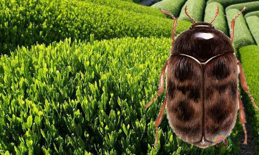 Beware the beetle: new import container measures come into effect soon