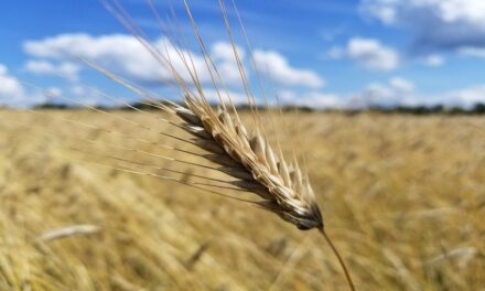 New South Wales leads expected winter crop bounce back