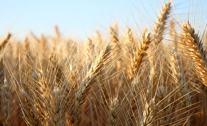 Recovery fund urged to mitigate barley tariff impacts (with video)