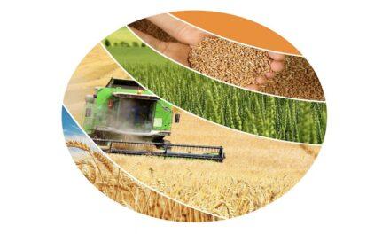 Monster winter grain crop predicted