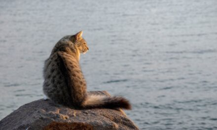 Investigation planned following Newcastle waterfront cat cull