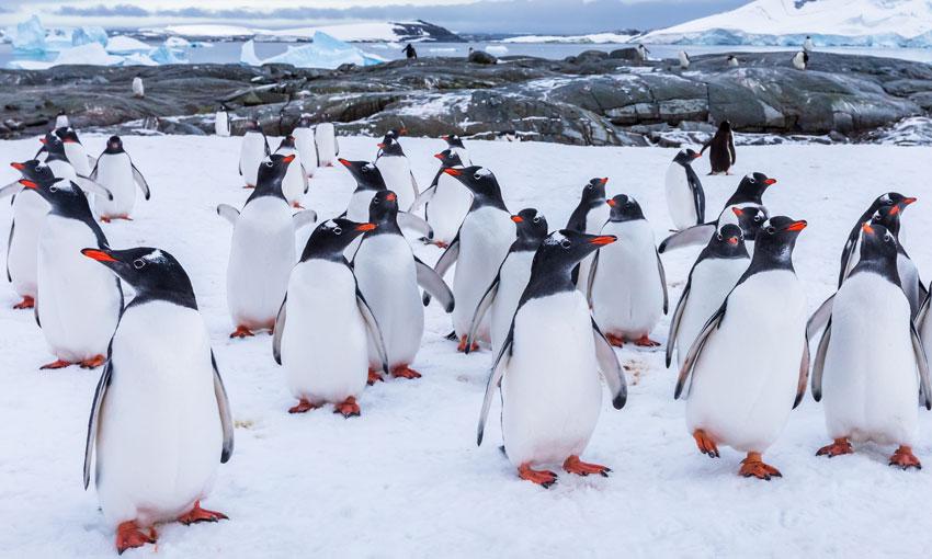Union cold on Antarctic plans