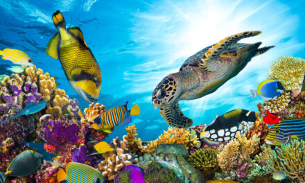 ANL launches Reef Recovery Program