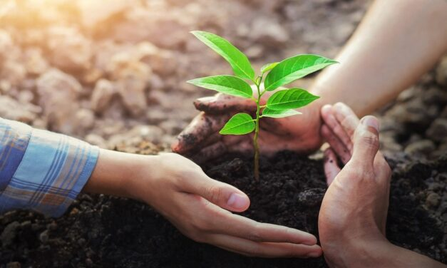CMA CGM's reforestration project hits New Zealand