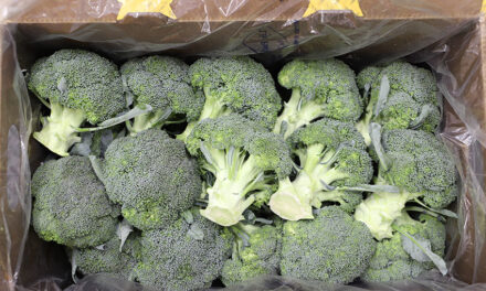 Air freight to sea freight: QLD looking at ways to export vegetables
