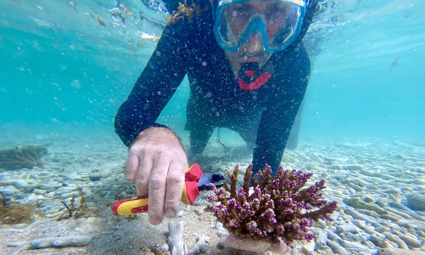 ANL acts to protect marine biodiversity