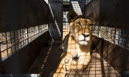 How to spot wildlife crime in the maritime industry
