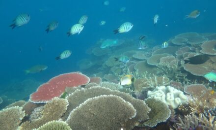 CMA CGM extends reef program to Coral Triangle